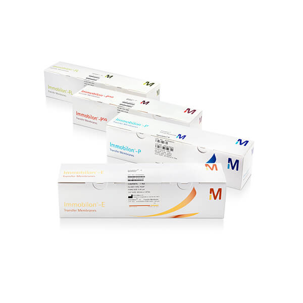 Buy 3 Western Blotting Products for the Price of 2