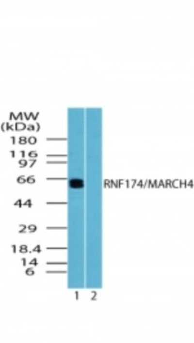 NBP224502SS