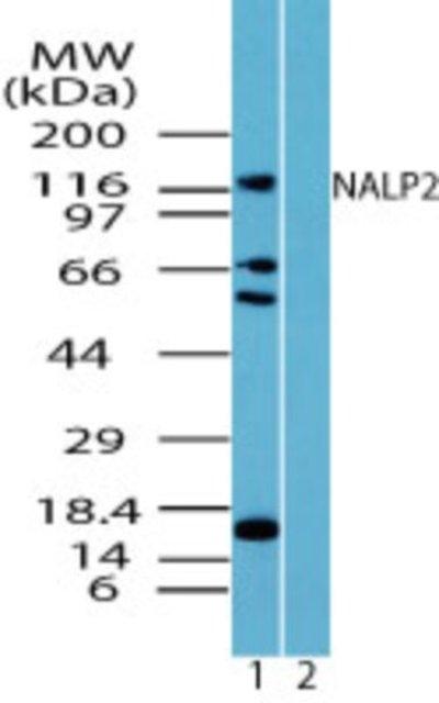 NBP224550