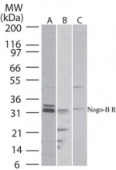 NBP224950