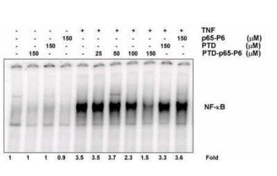 NBP229321