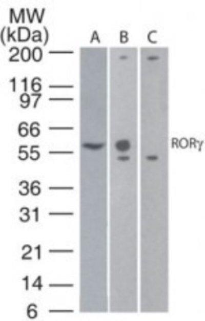 NBP224449